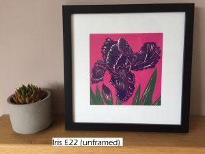 Pink iris 3